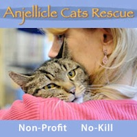 Anjellicle Cats Rescue